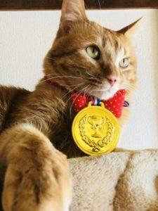 cat-winner